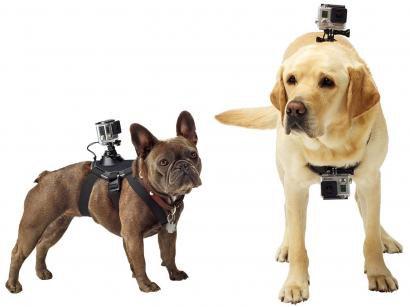 Cinturão Canino - GoPro